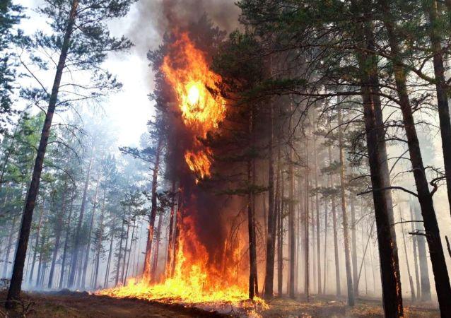 俄罗斯森林消防部门一天内扑灭35处林火