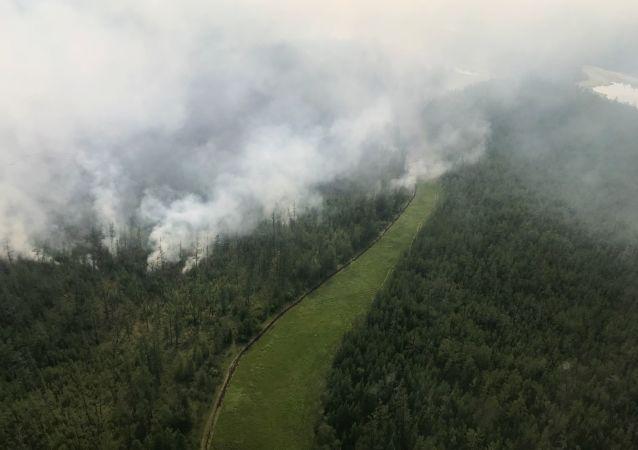 俄罗斯五个联邦区9月林火风险有所增高