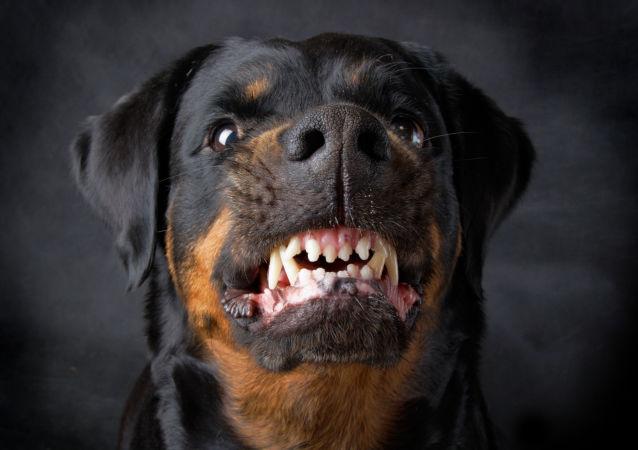 犬学专家介绍狗产生攻击行为的5个原因