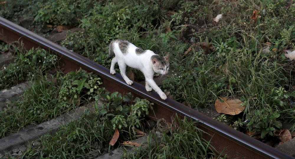 """斯里兰卡一只""""毒贩猫""""越狱"""