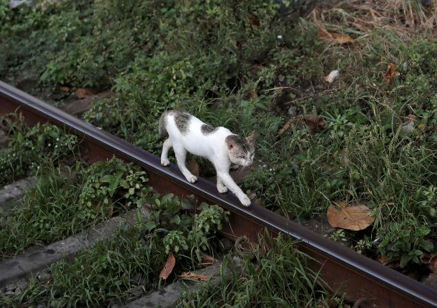 猫在雅罗斯拉夫尔郊外机场跑丢五个月后终被发现