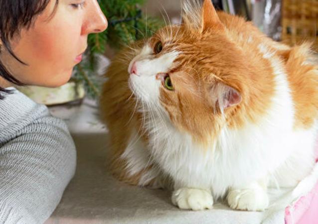 英国一家人找到失踪12年的爱猫