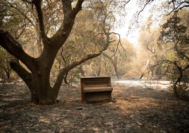美加州南部林火面积已达2100多公顷