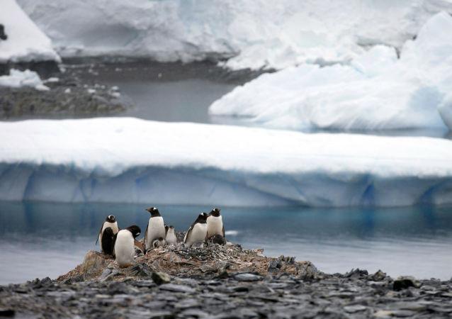 科学家观测到南极速度最快的冰川融化