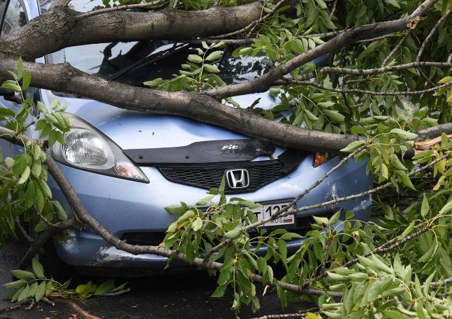 """俄滨海边疆区因台风""""美莎克""""损失或达265万美元"""