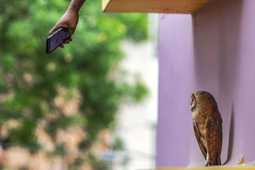 "印度摄影师Krishnendu Mitra的作品《Life In The City》,""Conservation Issues""类特别提名奖"