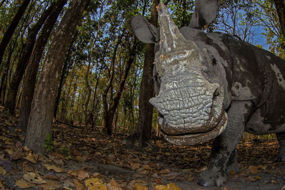 """摄影师Soumabrata Moulick的作品《Rhino's Day Out》,""""Animal Portraits""""类第二名"""