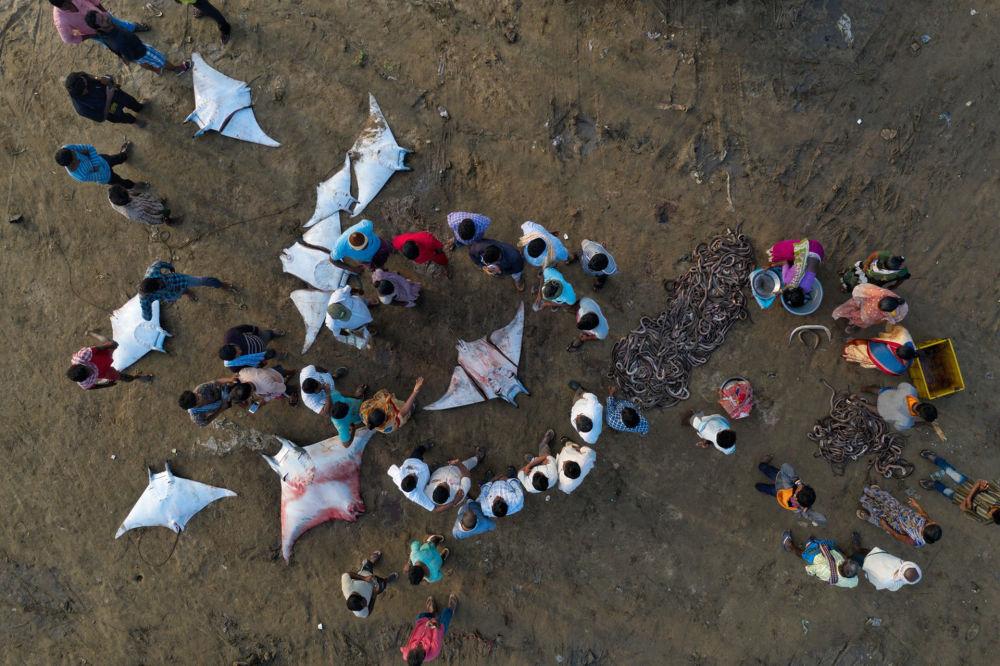 """摄影师Srikanth Mannepuri,的作品《Circle Of Death》,""""Conservation Issues""""类第一名"""