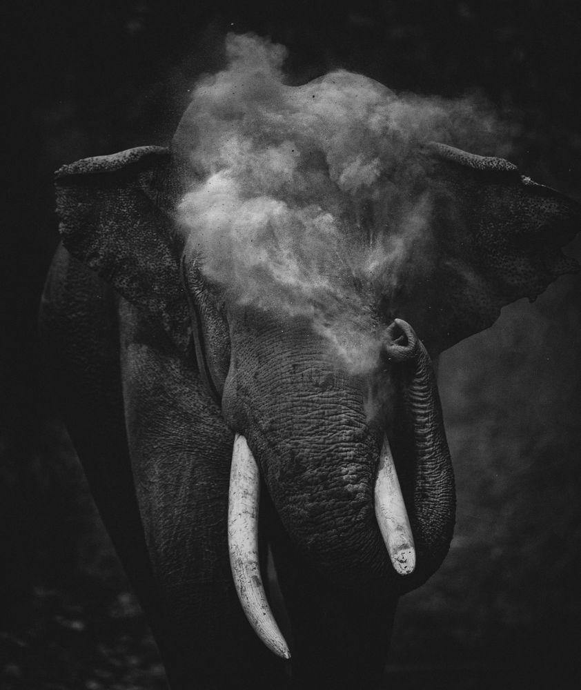 "摄影师Sitara Karthikeyan的作品《Dust To Dust》,""Young Photographer""类第一名"