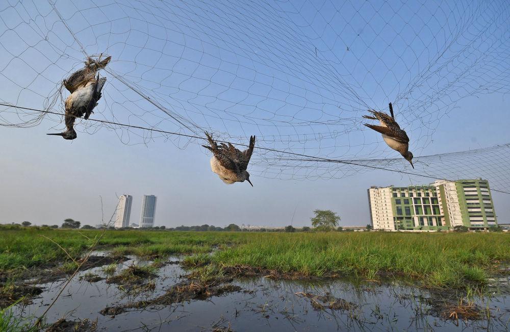 "印度摄影师Abhijit Addya的作品《Ambush In The Sky》,""Conservation Issues""类特别提名奖"