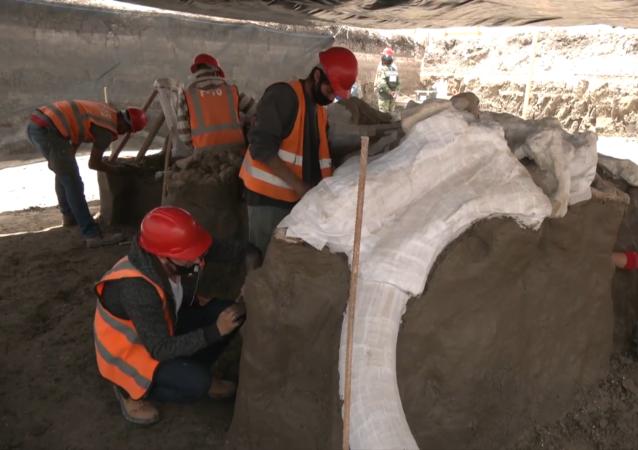 墨西哥发现数百块猛犸象骨骼