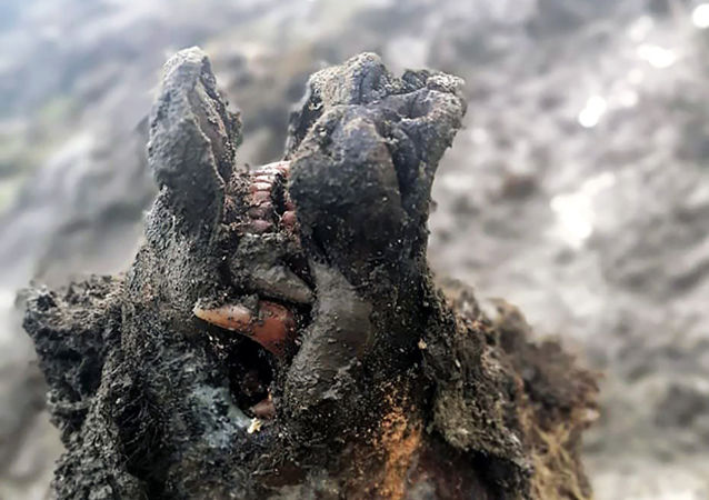 雅库特发现灭绝的洞熊遗骸
