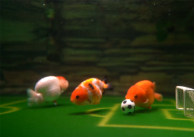 小伙训练金鱼踢足球