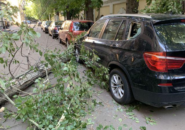 莫斯科大树被强风吹倒(资料图片)