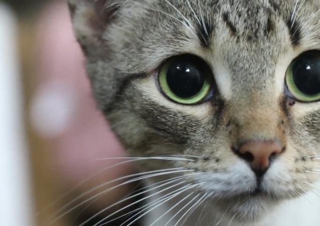 萨尔瓦多女子把家变成猫咪收容所