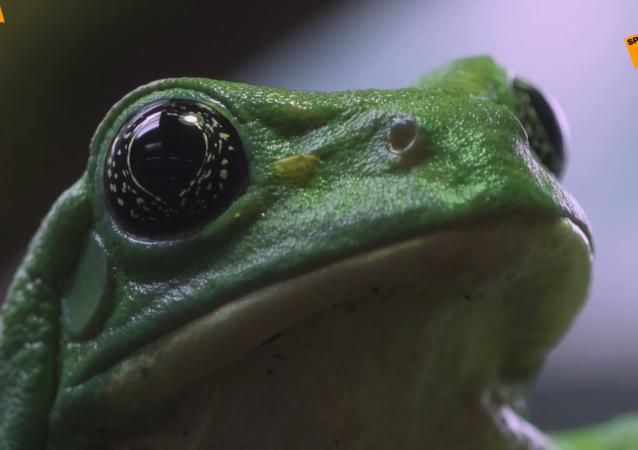 罕见的绿色青蛙