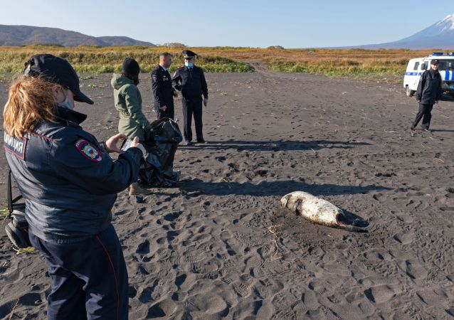 俄侦查委员会就堪察加半岛海水污染启动检查