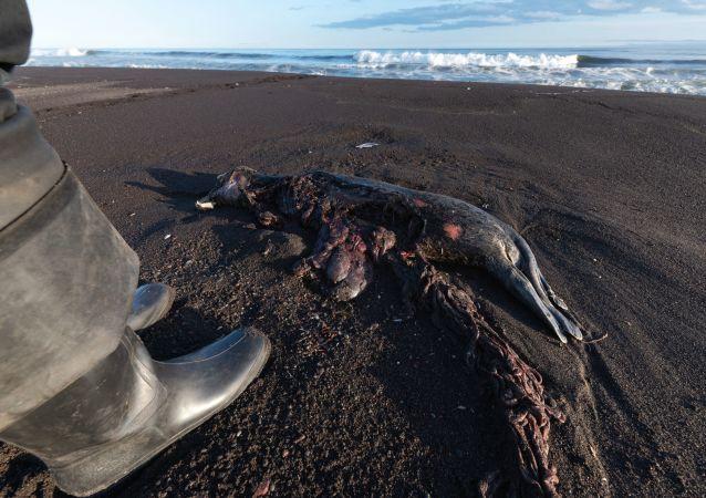 俄资源利用监督局未发现造成堪察加半岛海洋生物死亡的人为原因