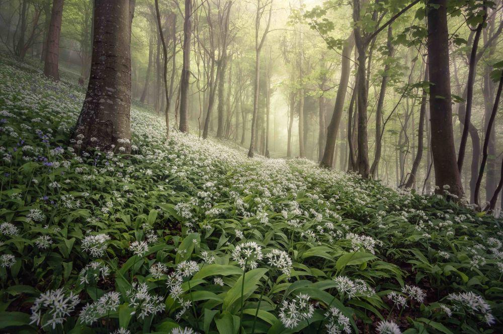 2020风光摄影师大赛获奖作品,摄影师Chris Frost的作品《Woolland Woods》。