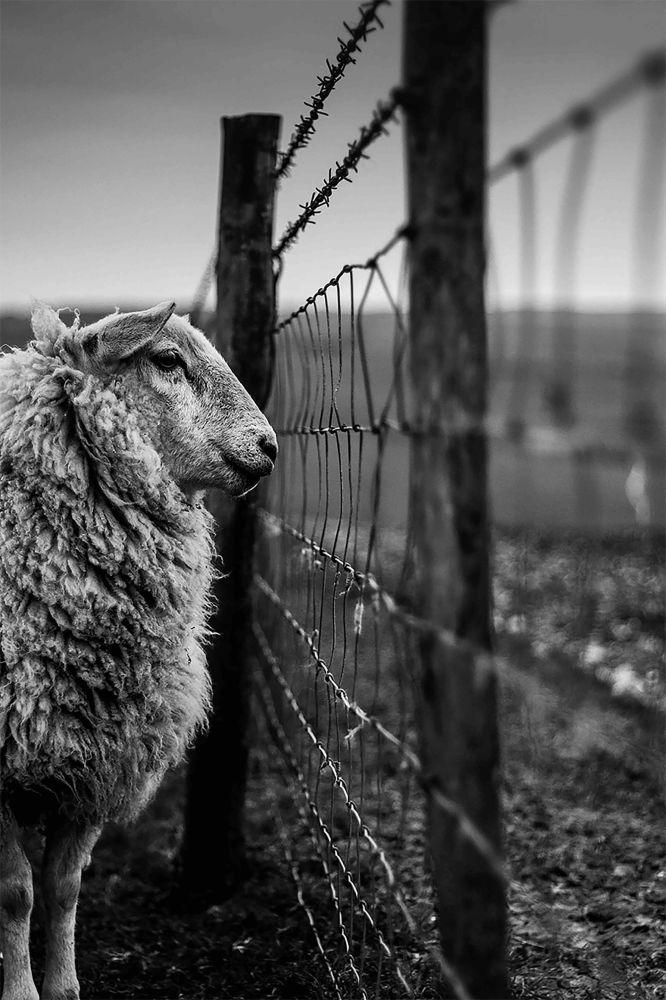 2020风光摄影师大赛Overall Youth LPOTY类别获奖作品《Counting Sheep》。