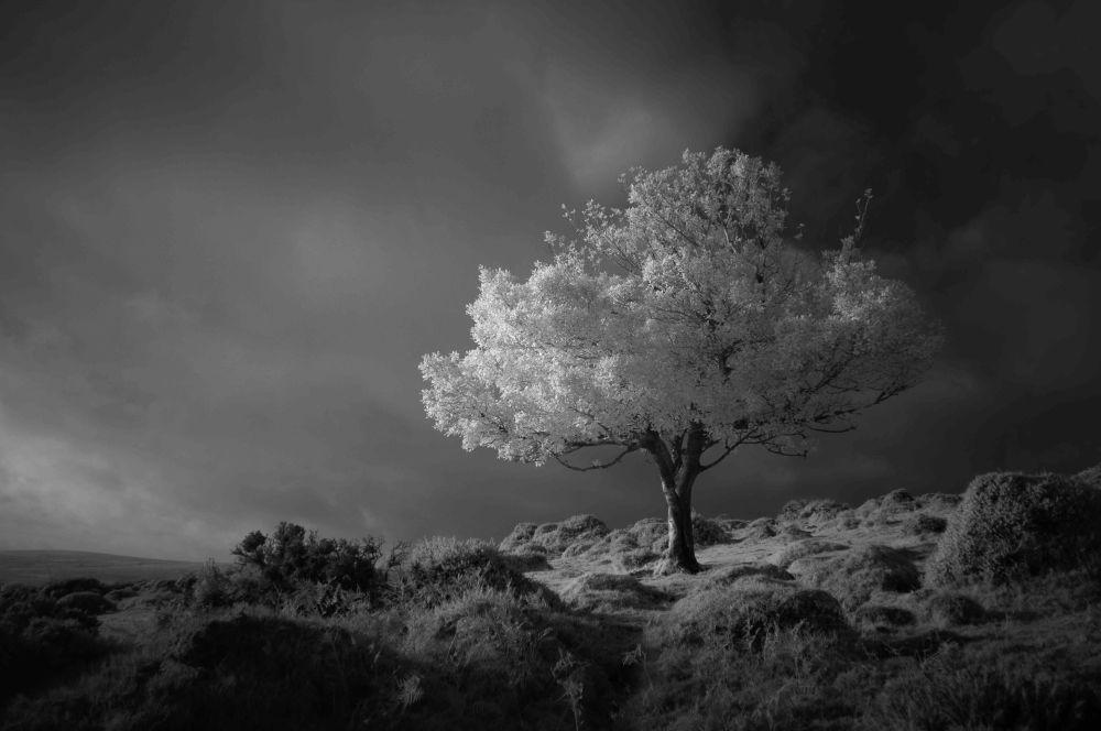 2020风光摄影师大赛Black and White类别获奖作品,摄影师Neil Burnell的《Fantasy》。