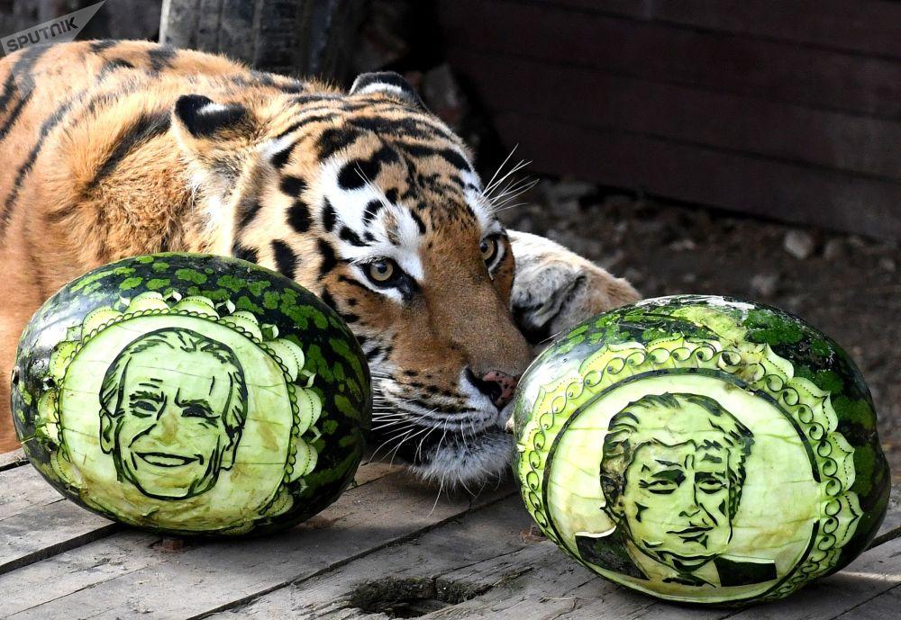 动物预测美国大选结果