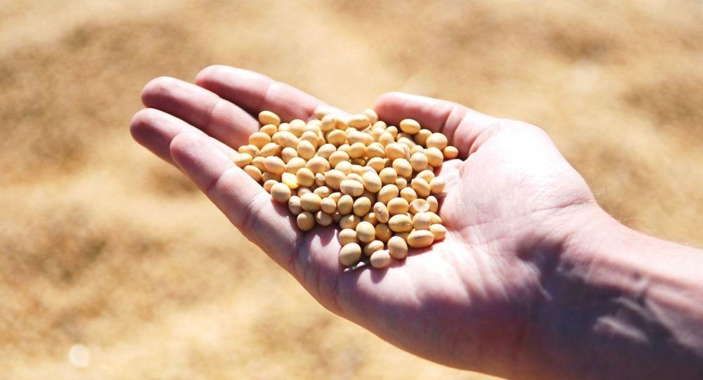 俄罗斯2月1日至6月30日将对大豆征收高额出口关税