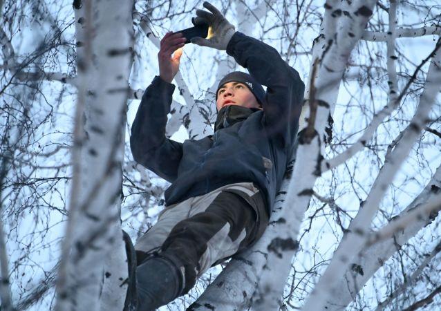 鄂木斯克一个村庄的大学生为了在Zoom上网课不得不爬上白桦树