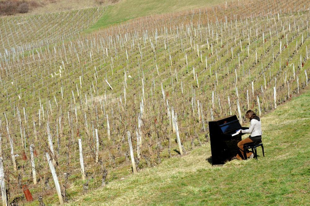 一名法国钢琴家在葡萄园演奏