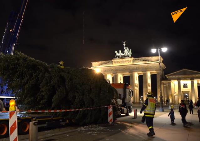 柏林市中心安装圣诞树 但不计划举办庆祝活动