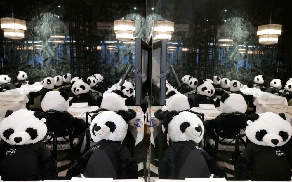 熊猫取代游客:德国餐馆被关闭