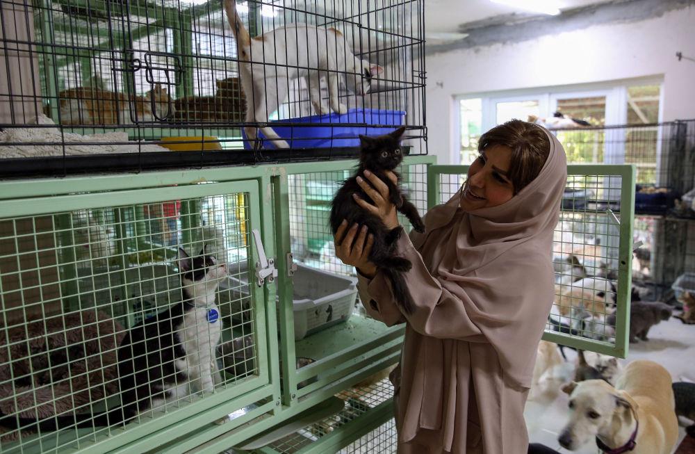 阿曼女子与480只猫和12只狗共处一室