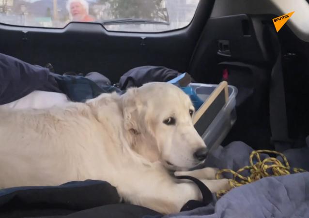 无人机找回一只在森林迷路10天的小狗