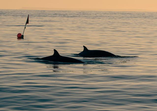 专家:2020年全球约2000头灰鲸因不明原因死亡