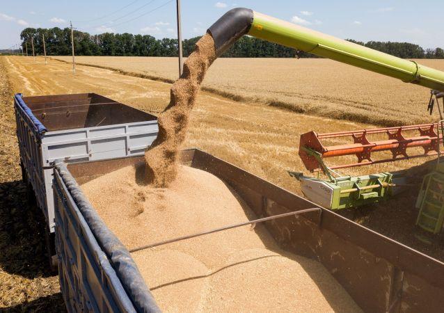 俄联邦统计局:2020年谷物产量1.3303亿吨 小麦8590万吨