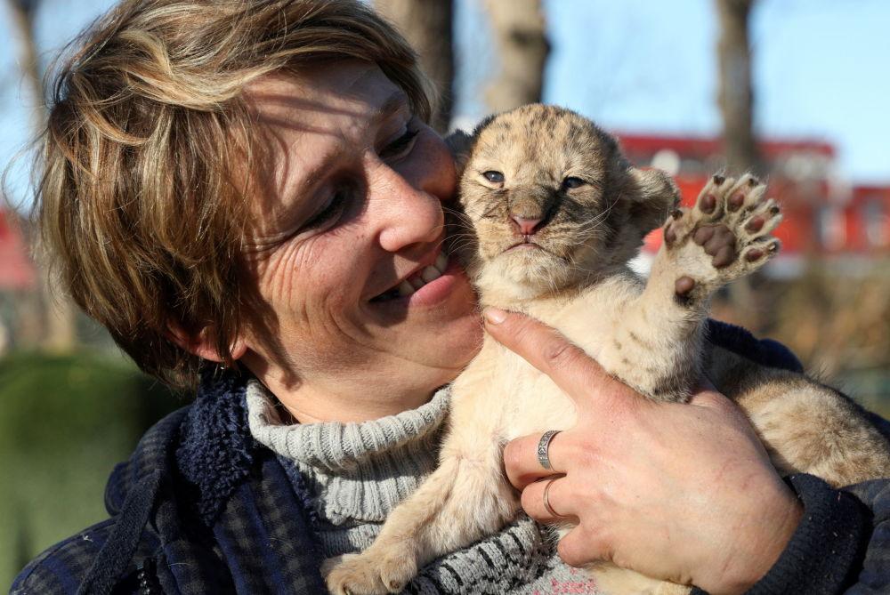 泰甘动物园的工作人员与小狮子。