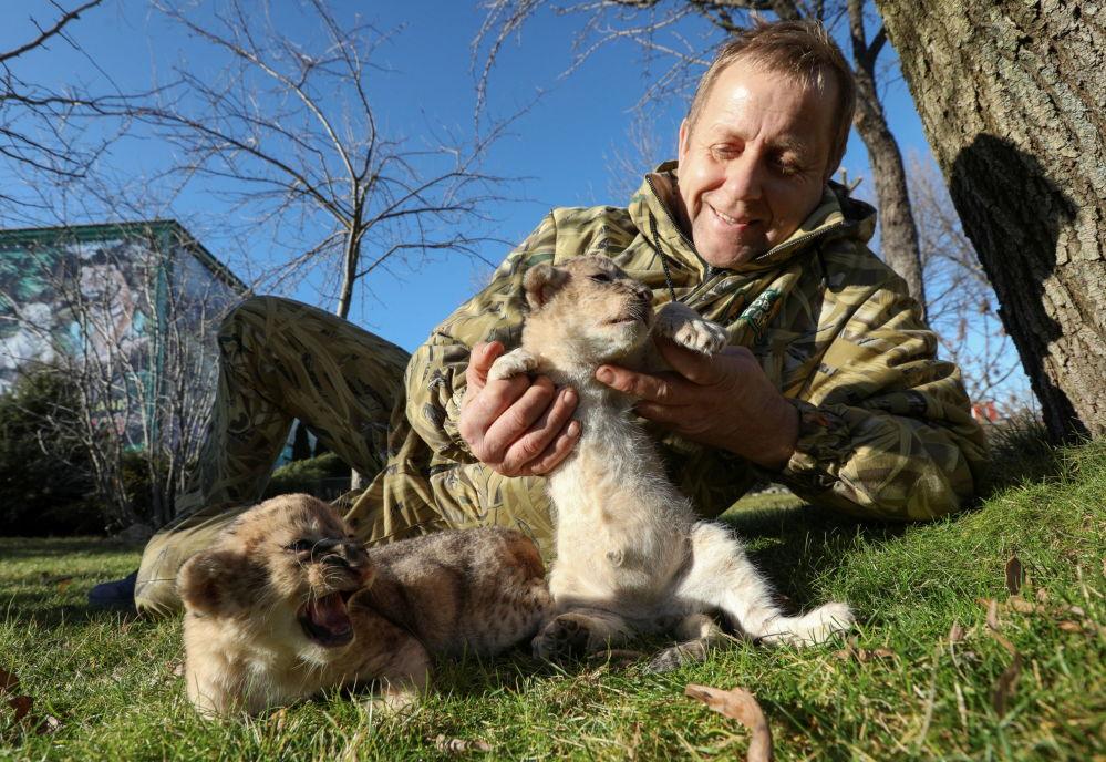 泰甘动物园园长奥列格·祖布科夫和幼狮。