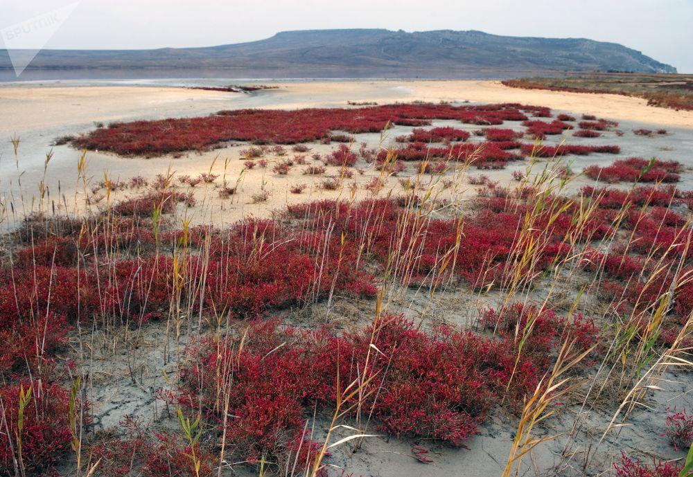 国家公园与保护区公园日