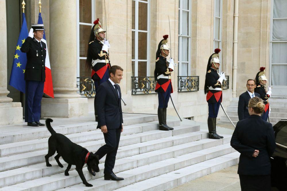 """世界各国元首的第一萌宠——是宠物或是""""助手"""""""