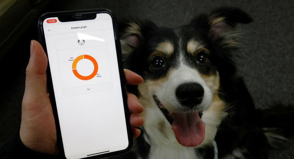 """韩国人发明诠释狗叫声的""""智能项圈"""""""