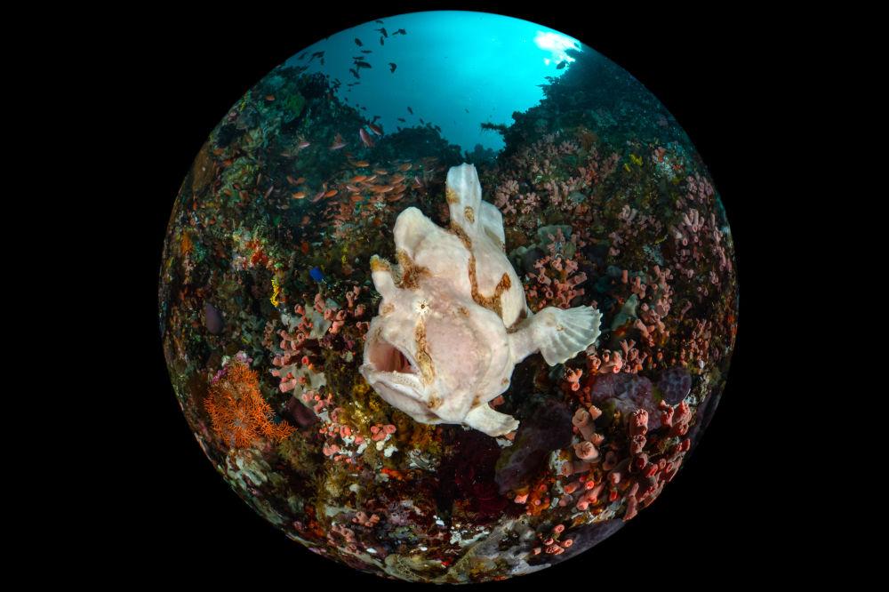 2020年海洋艺术水下摄影大赛获奖作品和入围作品展