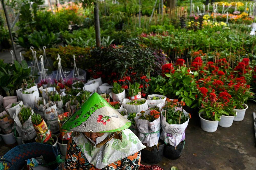 越南花海迎新年