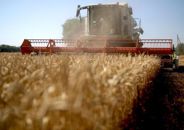 若解除限制措施 俄罗斯年对华粮食出口量可达500万吨