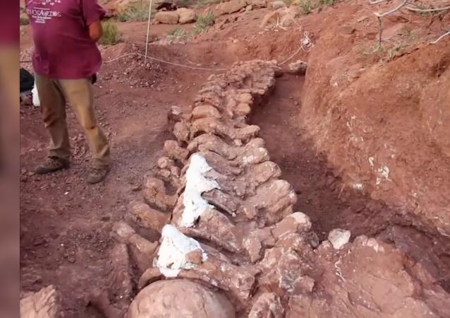 科学家发现世界最大恐龙化石