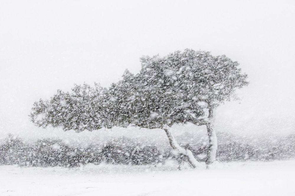 意大利摄影师亚历山德罗·卡邦尼的作品。