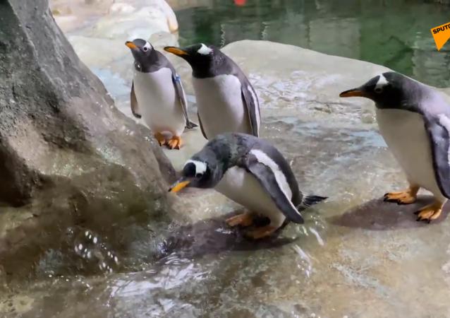 企鹅与肥皂泡泡