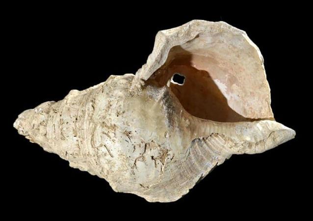 在法国马尔苏拉洞(Marsoulas cave)中挖出的、具有1800年历史的贝壳