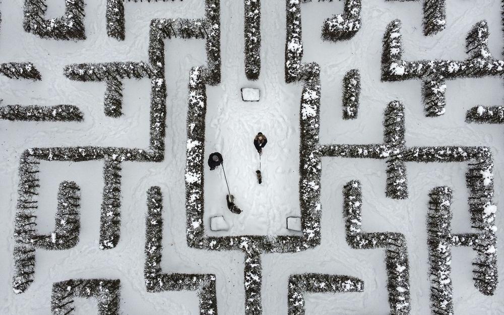 德国盖尔森基兴市居民在迷宫遛狗散步。