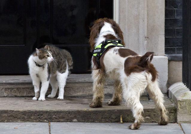 """史宾格犬马克斯成为获得""""动物界大英帝国勋章""""的首只宠物"""