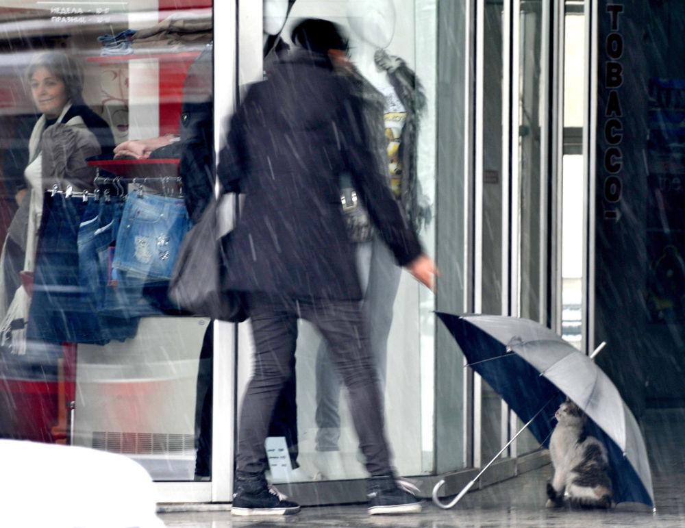 马其顿首都斯科普里一家商店前,一只猫藏在雨伞下。